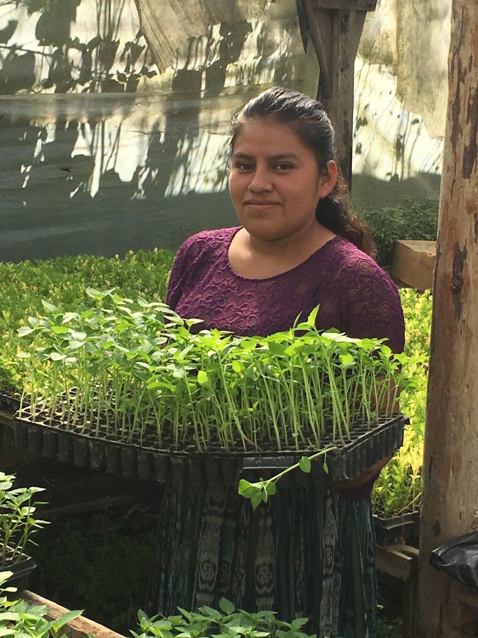 """Dentro de su Campaña Global para el Empoderamiento de las Mujeres Indígenas para el Hambre Cero, la Organización de las Naciones Unidas para la Alimentación y la Agricultura (FAO) junto al Foro Internacional de Mujeres Indígenas (FIMI) y la Agencia de Noticias de Mujeres Indígenas y Afrodescendientes (NOTIMIA) han organizado un concurso fotográfico en el que las imágenes debían estar tomadas por las propias mujeres. Esta fue una de las que recibió mención honorífica. """"Las mujeres Mayas Pocomch'i participamos en nuestras comunidades en la ejecución de proyectos productivos. Soñamos un mundo sin hambre o malnutrición, donde mujeres, hombres, niños y niñas tengan igual acceso a alimentos nutritivos y sanos, así como acceso a los medios para producir, vender y comprar alimentos. Nosotras soñamos con un mundo libre de violencia por motivo de género donde los roles, responsabilidades, oportunidades sean iguales para hombre como para las mujeres""""."""