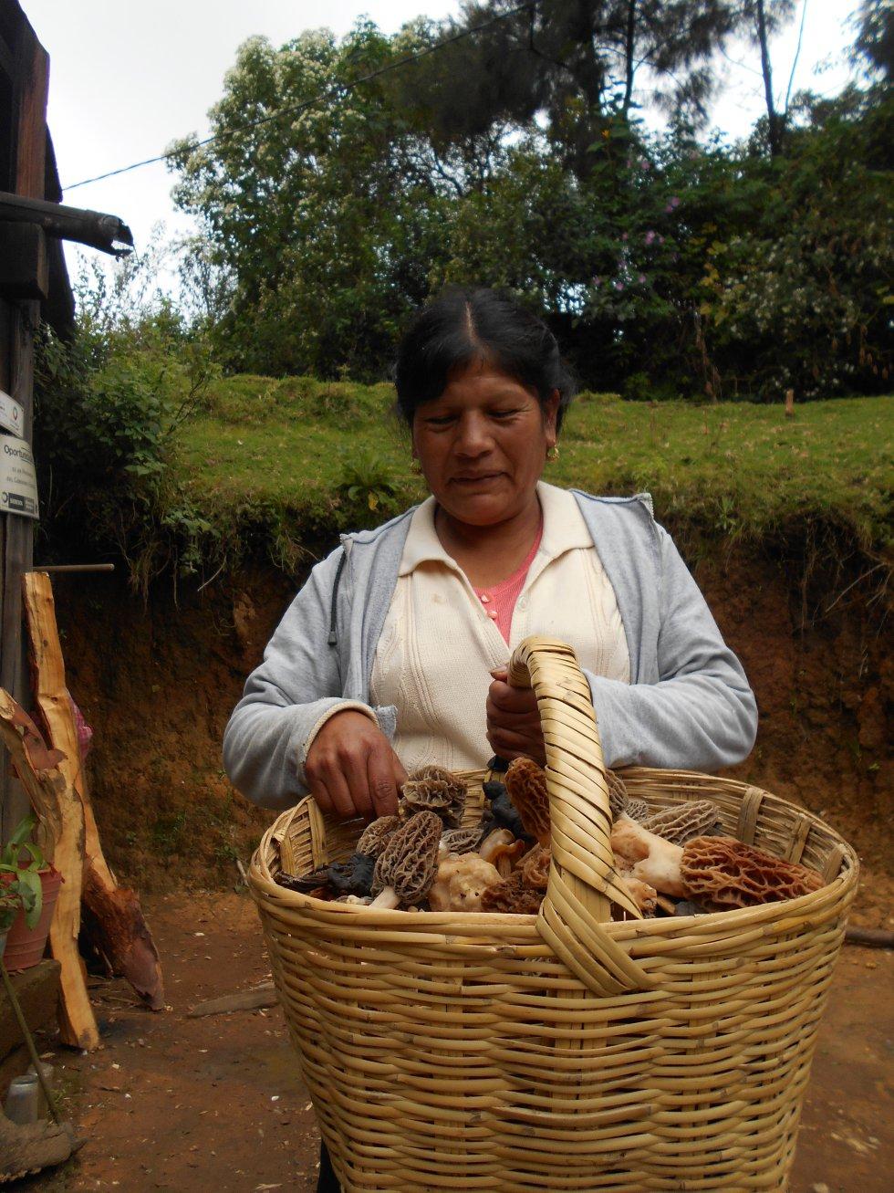 Esta foto muestra a Rosenda, una de las mujeres tlahuica pjiekakjoo. En su mano izquierda, nos muestra el hongo de olotito o mazorquita (Morchellasp), una especie muy apreciada dentro del pueblo pjiekakjoo por su exquisito sabor. En la comunidad existe una parte de la amplia diversidad de hongos comestibles silvestres que aún se conoce, consume y comercializa. Nuestra comunidad es una de las comunidades más micófagas de México y el mundo, al consumir más de 160 especies de hongos comestibles. La mayoría de las mujeres de la comunidad aprendieron desde niñas a reconocer y recolectar los hongos comestibles silvestres, las veredas, los parajes, los tipos de bosques en los que fructifican, y el patrón fenológico gracias a la enseñanza de su madre. Según la FAO, existen cerca de 185 millones de mujeres indígenas en el mundo, quienes a través de actividades sociales y productivas contribuyen en gran medida al desarrollo sostenible de sus comunidades. Sin embargo, esta contribución no siempre es reconocida. Esta imagen recibió mención de honor.