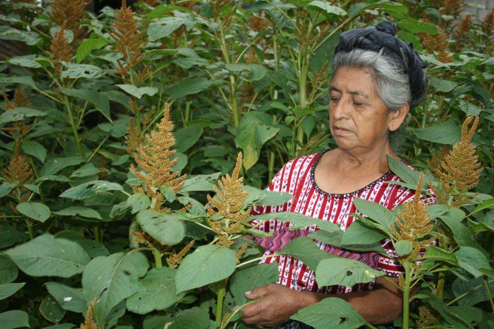 El amaranto es una semilla criolla nativa, rica en minerales, que contiene aminoácidos de alto valor biológico que ayuda a la memoria. Tras dos meses de trabajar la tierra, un grupo de 10 mujeres están listas para recoger la cosecha. Esta fotografía del pueblo kaqchikel en Guatemala también fue premiada con una mención honorífica.