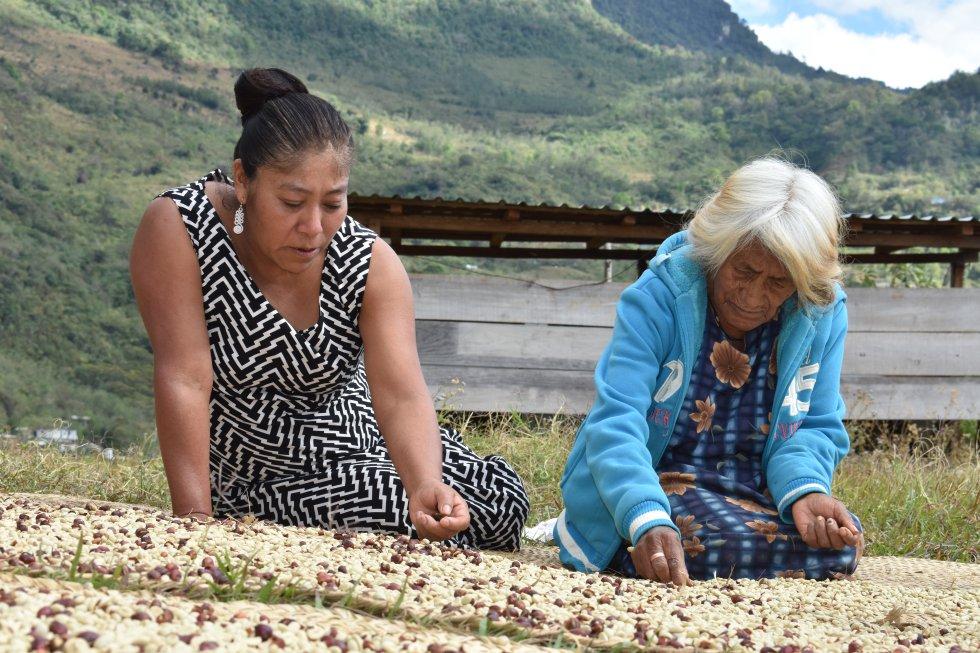 """La fotografía que recibió el primer premio es esta, del pueblo zapoteco en México. """"Las mujeres indígenas de la mixteca oaxaqueña son pilares en la producción del café, realizan tradicionalmente la cosecha, limpieza y selección de los granos. De sus ventas obtienen el sustento familiar. En sus manos, no solo están marcadas las huellas del trabajo arduo sino también la conservación de sus recursos, cultura e historia; en sus ojos reflejan el amor por la tierra, este mismo amor que debe ser conservado y transmitido a las nuevas generaciones""""."""