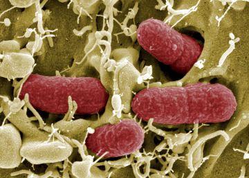 Los expertos denuncian la falta de financiación contra las 'superbacterias'
