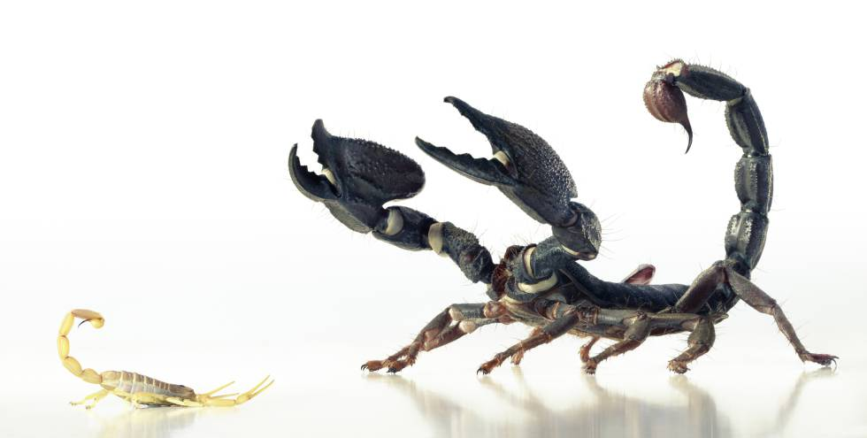 La naturaleza del escorpión