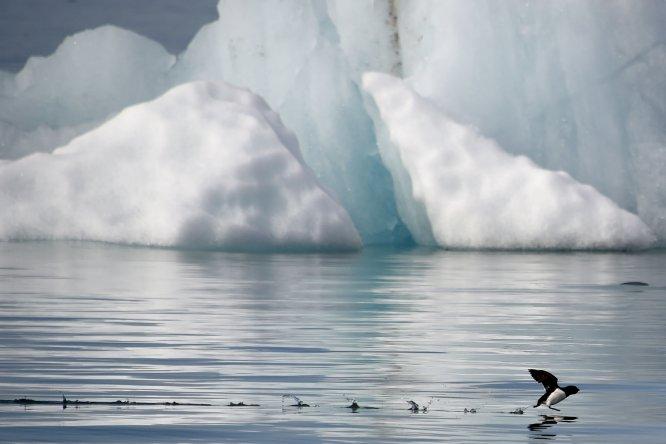 """El hielo ocupa el 60 % de la superficie de Longyearbyen, la localidad más septentrional del planeta. """"Hay más osos polares que personas"""", afirma Javier Reverte. Exactamente, 3.000 osos frente a 2.000 habitantes, dato por el que la ley exige que cualquier ciudadano que abandone los núcleos de población vaya armado con un rifle. La vida allí no es sencilla. No crecen árboles, ni se puede cultivar nada. La madera es un producto de lujo. Sin embargo, estos inconvenientes son compensados con ayudas sociales y ausencia de impuestos. ¿Por ejemplo? Los noruegos cuentan con una ayuda de 20.000 euros por instalarse allí y el alcohol corre sin restricciones libre de impuestos, lo que abarata mucho su coste."""