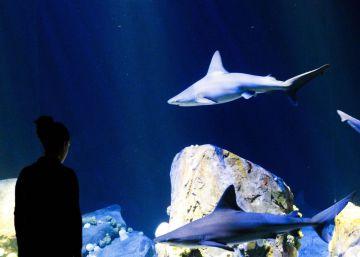 El mordisco del tiburón
