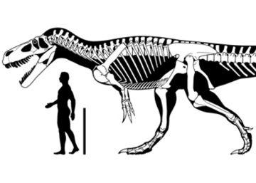 Un estudio atribuye una vértebra exhibida en Asturias al mayor dinosaurio carnívoro de Europa