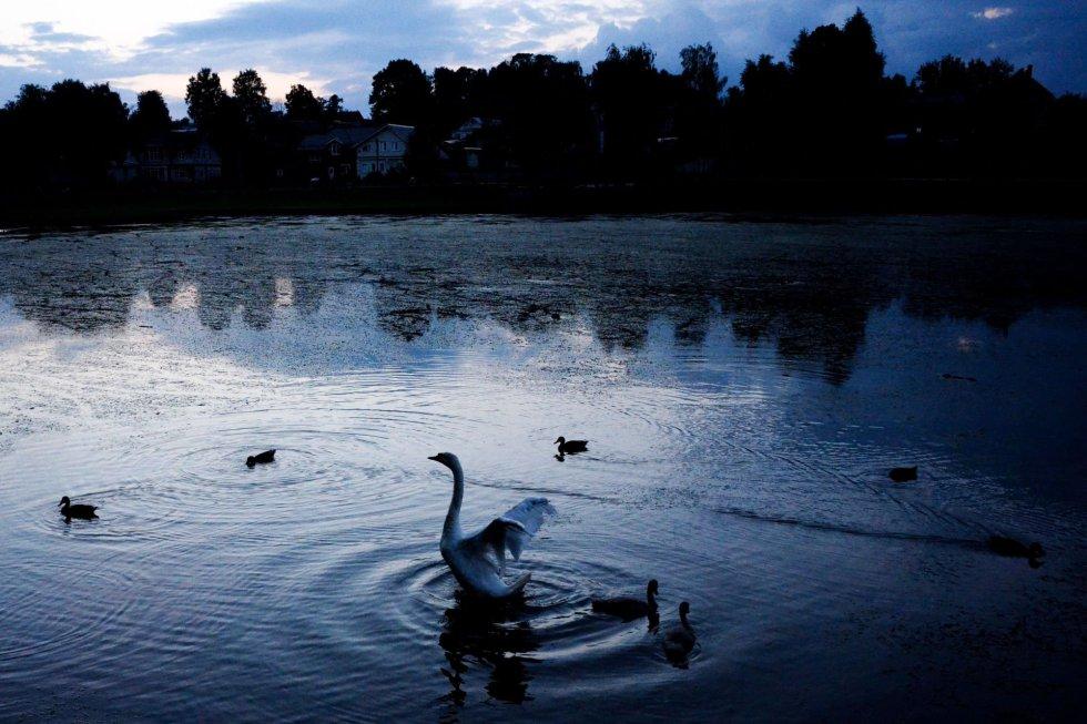 Un cisne en un estanque cerca de la Trinity Lavra medieval de San Sergio en la ciudad de Sergiev Posad (Rusia).