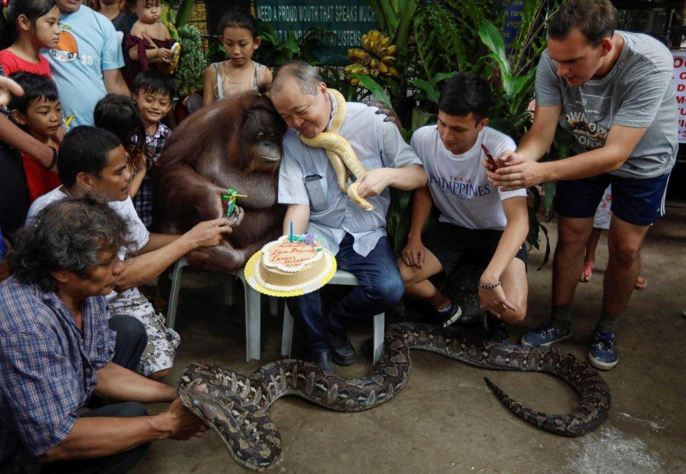 El propietario del parque zoológico, Manny Tangco (c), muestra una tarta de cumpleaños al orangután Pacquiao, a la pitón reticulada Black Mamba (abajo) y a una pitón albina en el Zoo de Malabón (Filipinas).