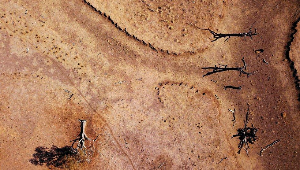 Árboles muertos en Gunnedah, en Nueva Gales del Sur (Australia).