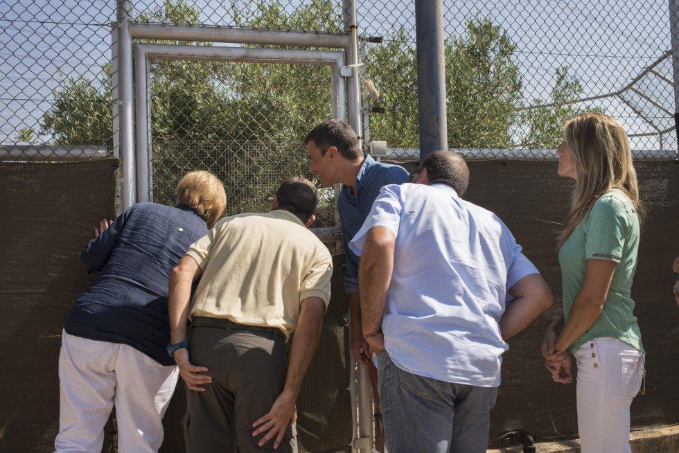 Durante su visita, Sánchez y Merkel han podido ver a estos linces rescatados del centro de cría portugués a través de las cámaras de vigilancia desde donde se controla el campeo en donde se encuentran estos ejemplares.