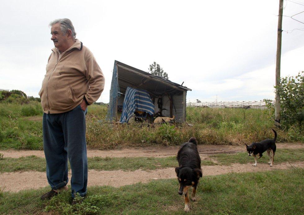 José Mujica, fotografiado en su finca en Rincón del Cerro, Montevideo, el 27 de noviembre de 2009, durante la campaña electoral de las elecciones presidenciales de 2009. Mujica encabezaba las encuestas de opinión sobre su rival Alberto Lacalle, del partido Partido Nacional.