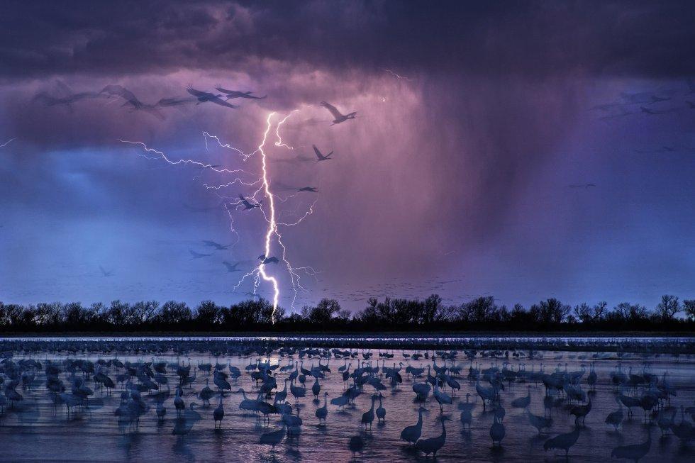 Aves de pastizales de grandes llanuras migran desde Siberia al Norte de México.