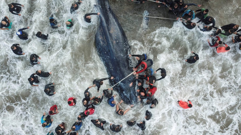 Trabajadores de rescate y voluntarios ayudando a una ballena varada en Mar del Plata (Argentina), el 9 de abril de 2018.