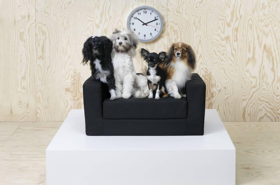 Perros y gatos ya tienen sus muebles de IKEA y se parecen a los tuyos