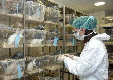 La experimentación con animales cae al mínimo desde que hay registros