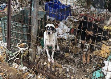 Entre basura, desnutridos o cerca de la asfixia: rescatados 16 perros en Málaga
