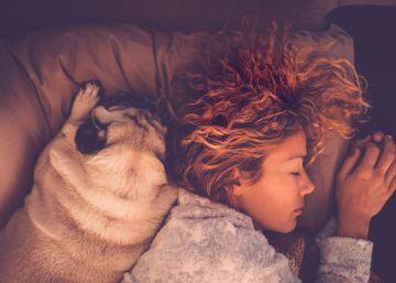 El secreto nocturno de los perros: por qué las mujeres prefieren dormir con ellos que con sus parejas