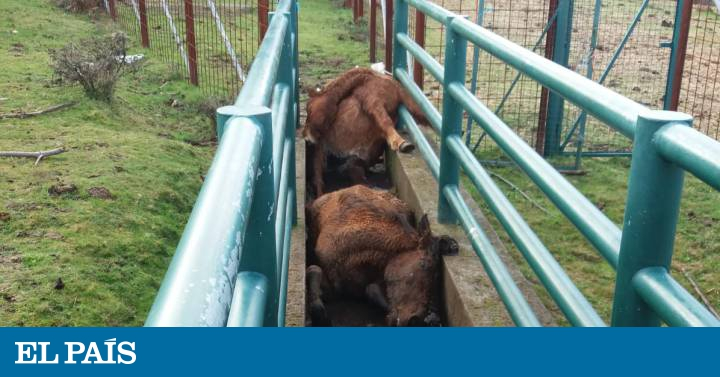 Animal rights: Brutal killing of four wild horses shocks Galicia