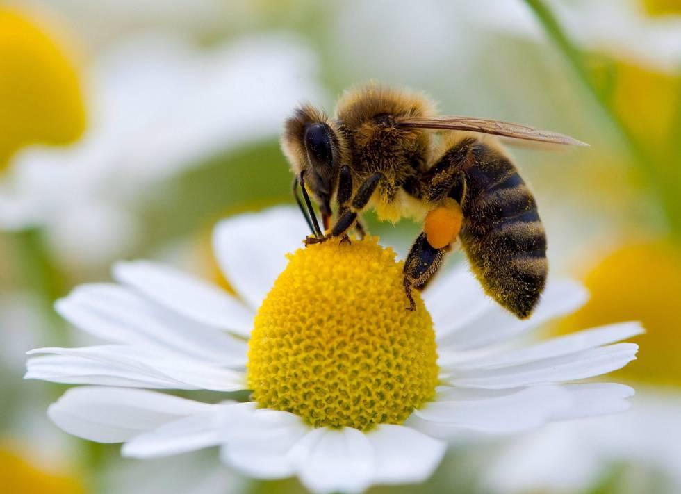 ¿Pueden aprender matemáticas los insectos?