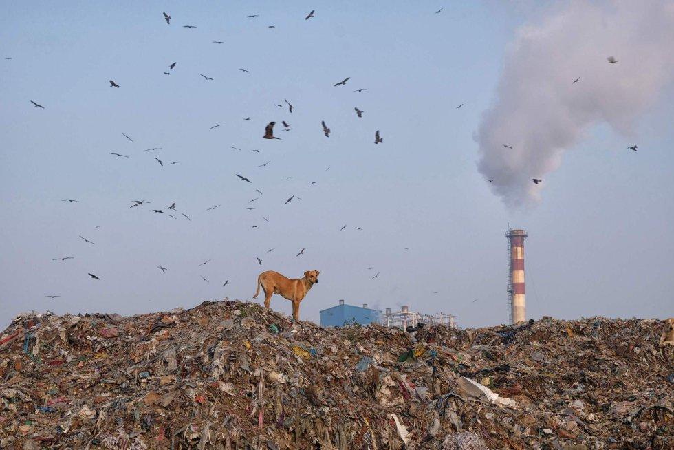 """O relatório – o sexto publicado, o primeiro data de 1997 – sustenta que, embora em alguns pontos concretos haja alguma melhoria, desde que se publicou a primeira edição, há mais de 20 anos, """"o estado geral do meio ambiente seguiu se deteriorando em todo o mundo"""". Na imagem, um cão sobre uma montanha de lixo em Nova Delhi (Índia), em 5 de março de 2019."""