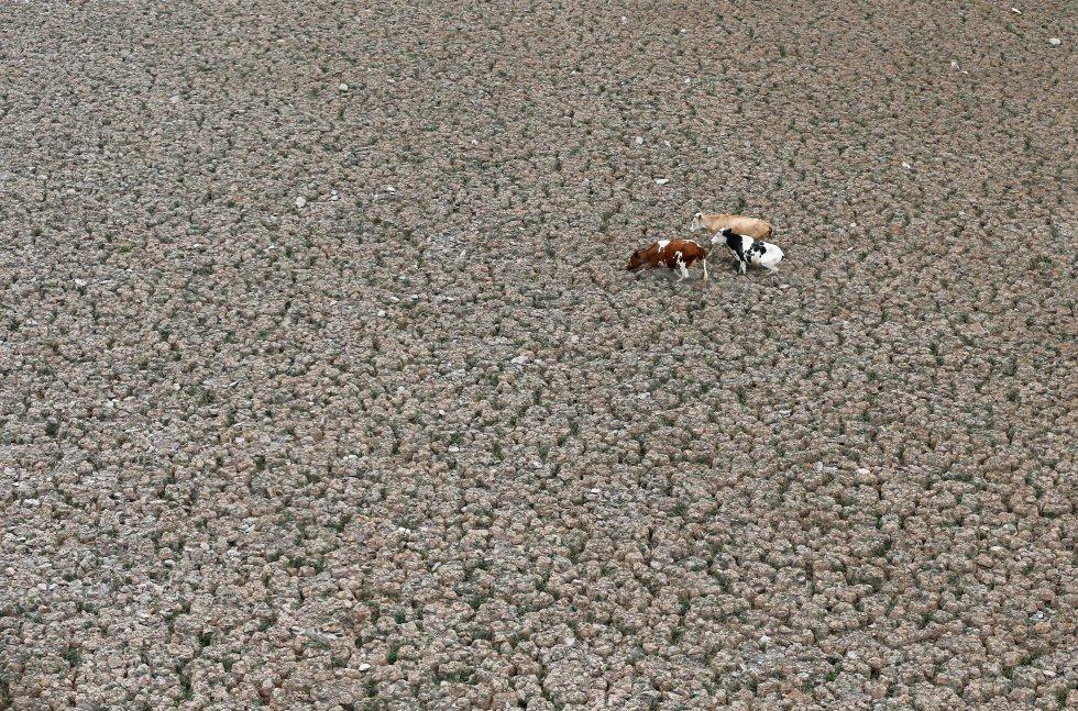 O Departamento do Meio Ambiente das Nações Unidas (UNEP) radiografou os principais problemas ambientais do planeta com base no conhecimento científico disponível. Na imagem, algumas vacas atravessam a lagoa seca de Aculeo, em Paine (Chile), em 9 de janeiro de 2019.
