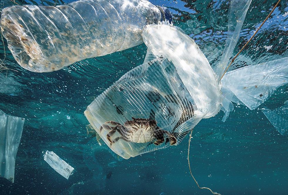 A crise ambiental para a qual o modelo insustentável de desenvolvimento do ser humano levou à Terra tem faces preocupantes. As mudanças climáticas ameaçadoras e transversais, a perda dramática da biodiversidade, a redução drástica da água doce disponível, a poluição do ar mortal, a inundação de plásticos nos mares e oceanos, a sobrepesca... Na imagem, um caranguejo está preso em um copo de plástico no mar na Passagem de Isla Verde, nas Filipinas, em 7 de março de 2019.