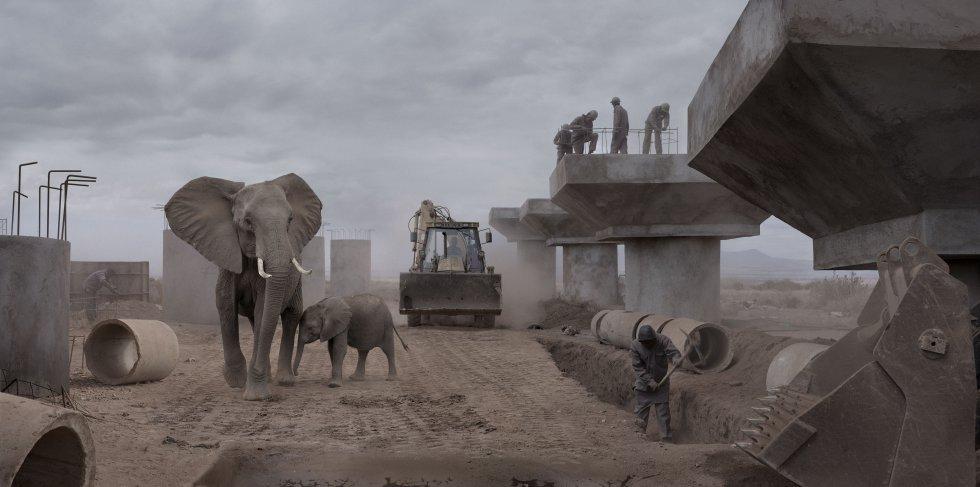 Construção de uma ponte com escavadora e elefantes.