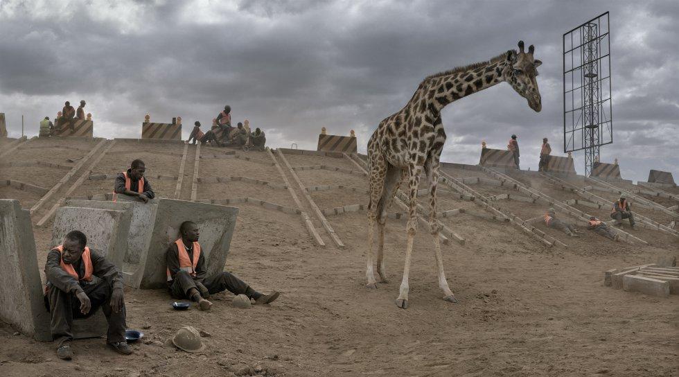 Onde um dia eles vagaram livremente, nas terras desabitadas do Masai (Quênia), perto do parque nacional de Amboseli, animais selvagens lutam para se adaptar a um novo mundo. Eles são os novos excluídos da civilização, protagonistas do mais recente trabalho do fotógrafo, 'This Empty World, que é exibido na Fahey Klein Gallery, de Los Angeles (EUA).