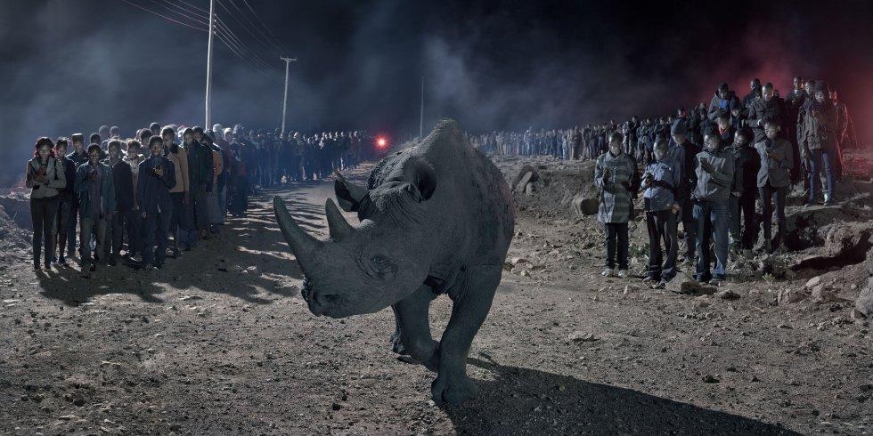 Um rinoceronte fotografado no ambiente onde uma construção era feita. As imagens dos humanos, dos animais e da construção foram registradas no mesmo local, porém, em momentos diferentes, e depois sobrepostas para formar o cenário.