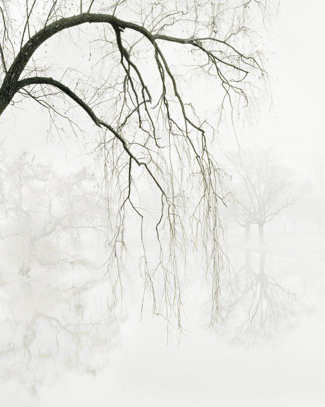 Salgueiro entre água e nevoeiro, Madri.