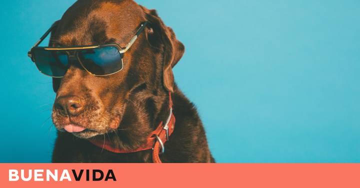 Y Gafas Sol Que Poner De Diez Perro Cuándo Dudas Hay Otras Al bgvIYfm76y