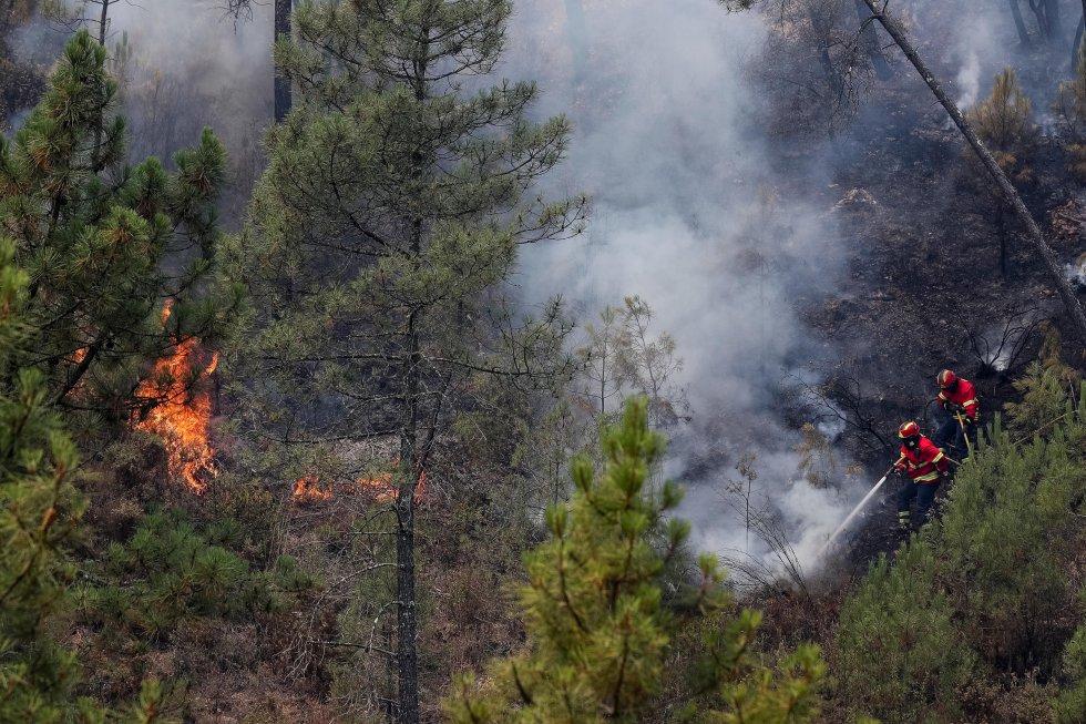 Image result for incendio forestal en Mação