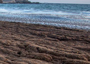 """It's an environmental catastrophe"" – The algae threatening Spain's southern coast"