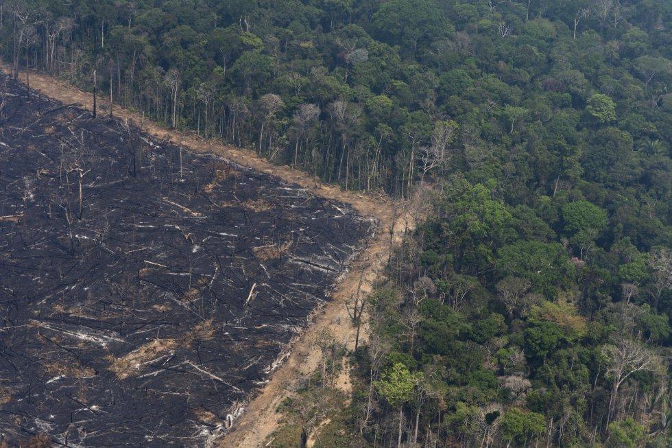 """""""La Amazonia arde durante las sequías, pero no por las sequías. Se quema porque hay una demanda de pastos y tierras de cultivo, y el Gobierno actual [presidido por Jair Bolsonaro] no solo no incluye el desarrollo sostenible en sus planes, sino que alienta la deforestación y restringe las acciones sistémicas contra ella"""", lamenta Machado, investigadora de la Universidad de Sheffield (Reino Unido) que estudia los impactos de las actividades humanas en las selvas tropicales. En la imagen, vista aérea de una zona de selva virgen junto a otro quemado recientemente cerca de Porto Velho, el 23 de agosto."""