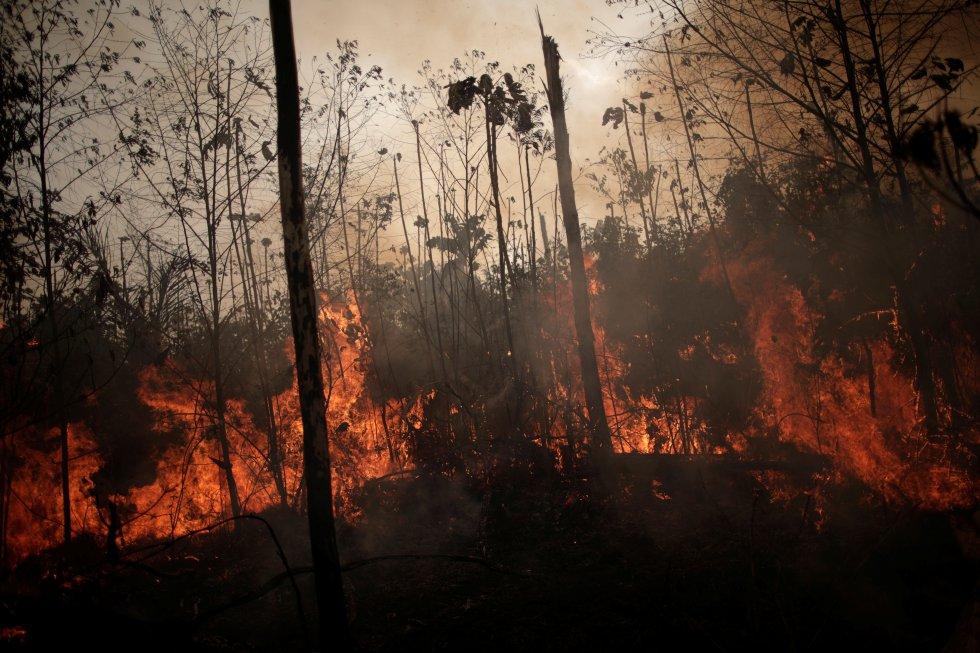 """""""Lo que muestran nuestros datos es que hubo una intensidad diaria de incendios por encima de la media en algunas partes de la Amazonia durante las dos primeras semanas de agosto"""", señala Mark Parrington, de Copérnico, el programa europeo de observación de la Tierra. """"Pero, en general, las emisiones totales [de CO2 generado por los incendios] estimadas para agosto han estado dentro de los límites normales: más altas que en los últimos seis o siete años, pero más bajas que a principios de la década de 2000"""", subraya. En la imagen, las llamas queman una zona de la selva amazónica cerca de Porto Velho (Brasil), el 23 de agosto."""