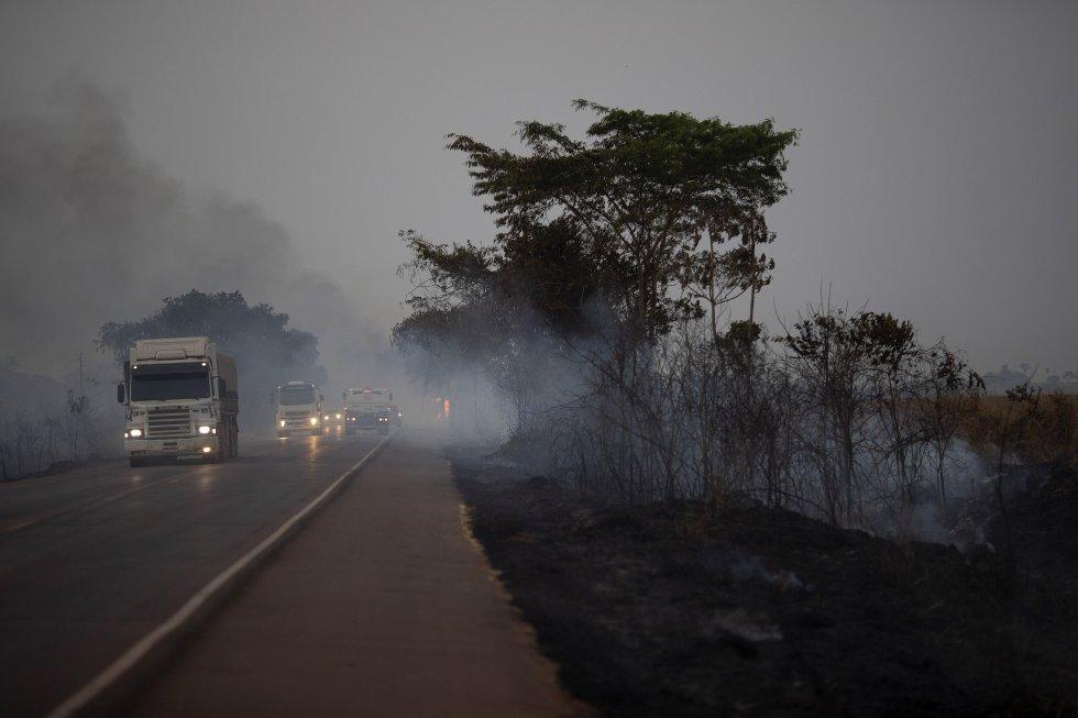 """""""El problema es que los bosques incendiados pierden carbono a medida que los árboles quemados van muriendo lentamente, lo que provoca un mayor cambio climático y una mayor pérdida de la biodiversidad"""", apunta el ecólogo David Edwards. En la imagen, camiones circulan junto a un campo quemado del municipio de Nova Santa Helena (Brasil), el 23 de agosto."""