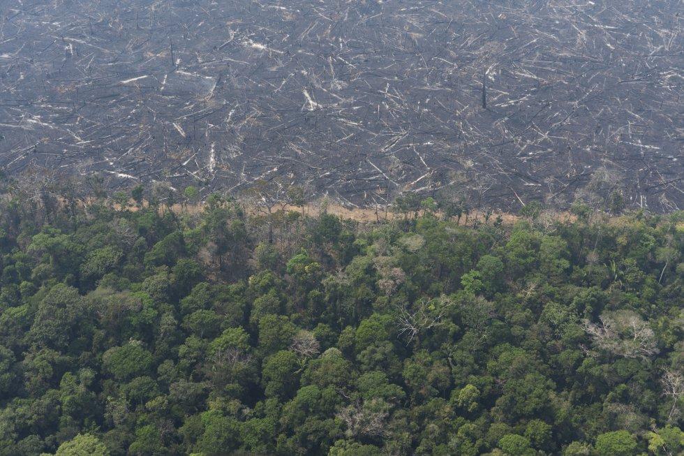 La progresiva 'sabanización' de la selva es una amenaza real, según alertó en 2016 un equipo de científicos brasileños encabezado por el climatólogo Carlos Nobre, de la Academia Nacional de Ciencias de EE UU. En la imagen, vista aérea de un exuberante bosque junto a un campo de árboles carbonizados ceca del municipio de Porto Velho (Brasil), el 23 de agosto.