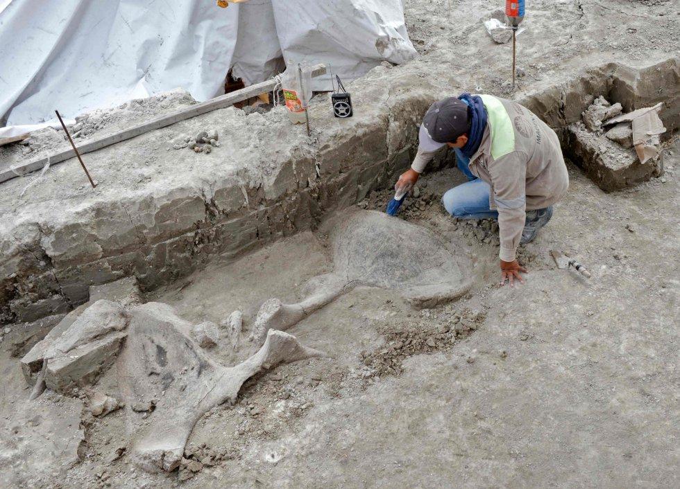 Un experto trabaja con los huesos de mamut en Tultepec. Las excavaciones hablan por primera vez de la forma en la que los pobladores de hace 15.000 años se relacionaban con estos animales, cómo los cazaban con el fin de alimentarse.rn