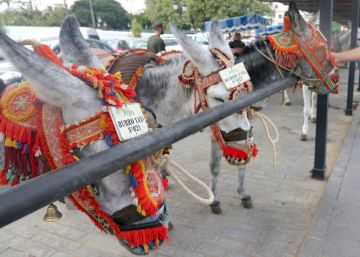 Eighty-kilo passenger limit takes a weight off the shoulders of Mijas's donkeys