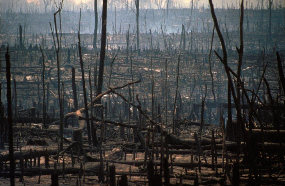 Incêndio voluntário da floresta virgem da Amazônia para a criação de áreas de gado no Brasil em uma imagem de 2017.