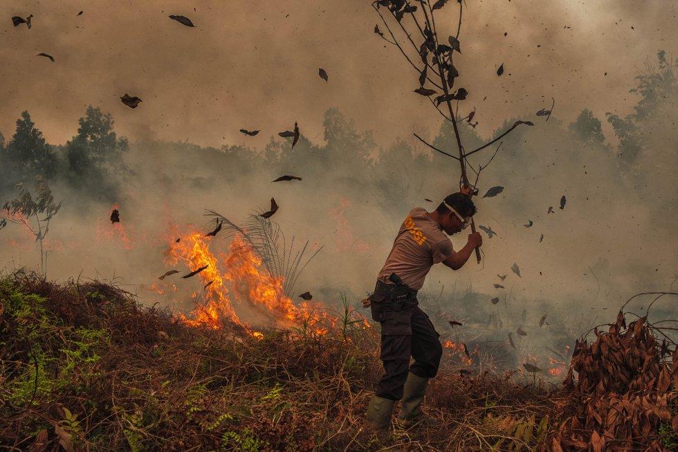 Segundo a ONU, a frequência e magnitude dos incêndios florestais, algo que ocorria anteriormente sazonalmente, está aumentando devido às mudanças climáticas com efeitos devastadores que resultam na perda de vidas, propriedades, recursos para subsistência e biodiversidade. Na foto, um policial tenta combater um incêndio em Riau, na Indonésia, em 4 de outubro.