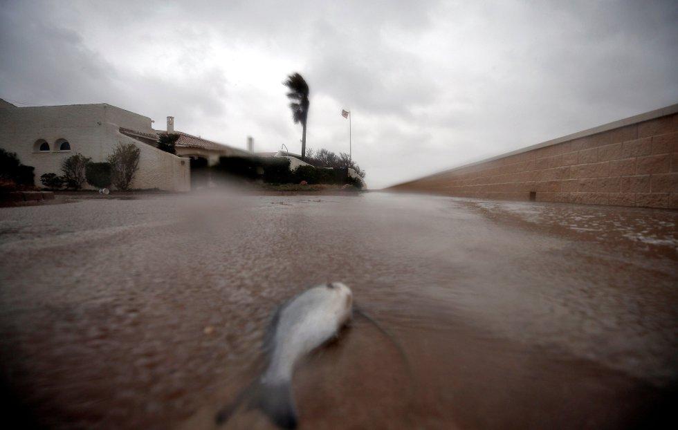 Un pez tras ser lanzado por el fuerte oleaje al paseo marítimo de la urbanización la Casbah, en el Saler en Valencia, este lunes.