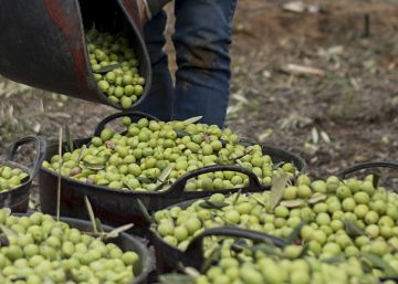 Spain's olive oil industry is already feeling the impact of Trump's tariffs