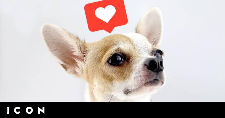 De Perros Taza De Té A Gatos De Lujo El Peligroso Negocio De Los Animales Bonitos En Instagram Icon El País