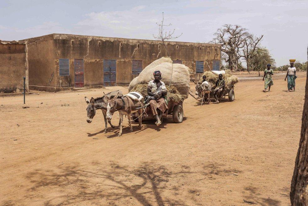 Si hay un conflicto en el mundo que pasa desapercibido en las portadas de los principales medios de comunicación, es el conflicto del Sahel. Desde enero de 2012, cuando una coalición de grupos rebeldes y yihadistas inició una rebelión armada, unas 15.000 personas han sido asesinadas y tres millones han huido de sus hogares. Malí y Burkina Faso son los países más afectados por una guerra invisible que está causando una verdadera catástrofe humanitaria: 3.000 escuelas y centros de salud cerrados, regiones enteras bajo el control de los radicales, violencia intercomunitaria y represión contra la población civil en un contexto de extrema pobreza y aumento de la sequía debido al cambio climático. En Mali la situación ha sido tan crítica que incluso ha desembocado recientemente en un golpe de estado llevado a cabo por altos cargos del ejército maliense. En la imagen, de marzo de 2020, una mujer desplazada azuza a dos burros para que tiren de su carro por los arenosos caminos de Barsalogho, un pueblo burkinés del Sahel donde desde inicios de 2019 existe un campo para desplazados internos que acoge a unas diez mil personas.