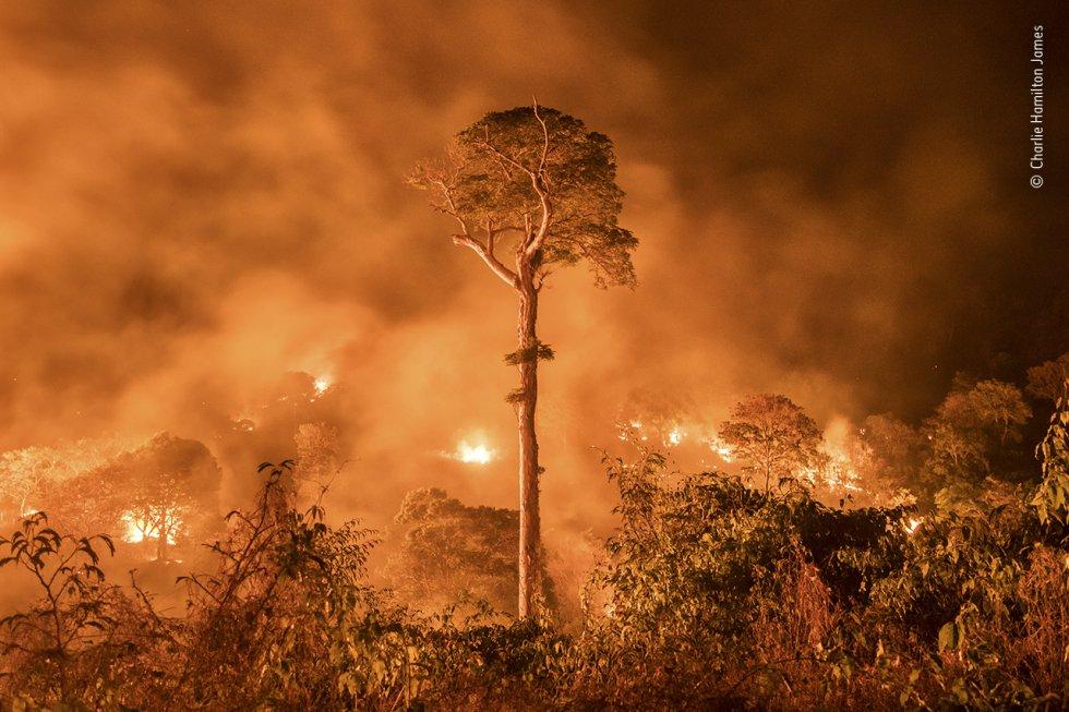 Un incendio descontrolado en el Estado de Marañón, en el noreste de Brasil. Un solo árbol permanece en pie. Charlie Hamilton ha estado cubriendo la deforestación en el Amazonas durante la última década.
