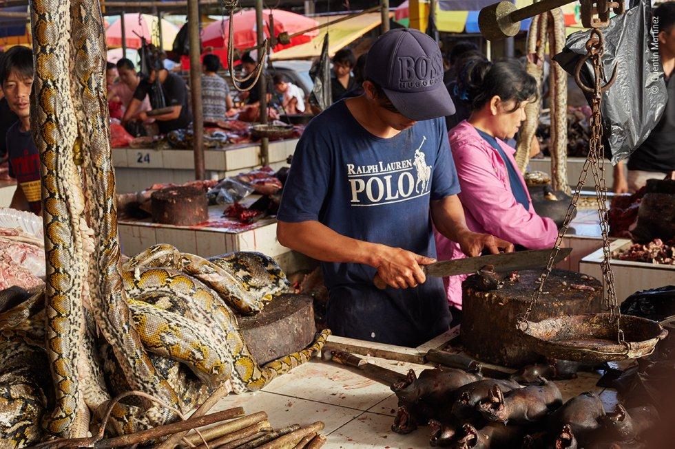 Un comerciante destripa murciélagos frugívoros en el mercado de animales salvajes de Tomohon, al norte de Sulawesi (Indonesia). En la imagen se pueden apreciar otras especies, entre ellas pitones.
