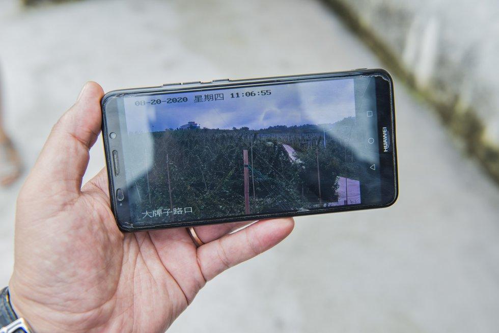 """Junto a estos elementos rudimentarios, una cámara de videovigilancia sirve de contraste. Zhou muestra en su móvil la retransmisión en tiempo real. """"Las imágenes nos permiten hacer un seguimiento más completo del proceso de maduración y de la situación de las plagas, incluso en días como estos, cuando el tiempo es muy malo. Y los datos que nos proporcionan con el sistema -y que puede consultar a través de una aplicación- nos permiten mejorar mucho la eficiencia"""", añade."""