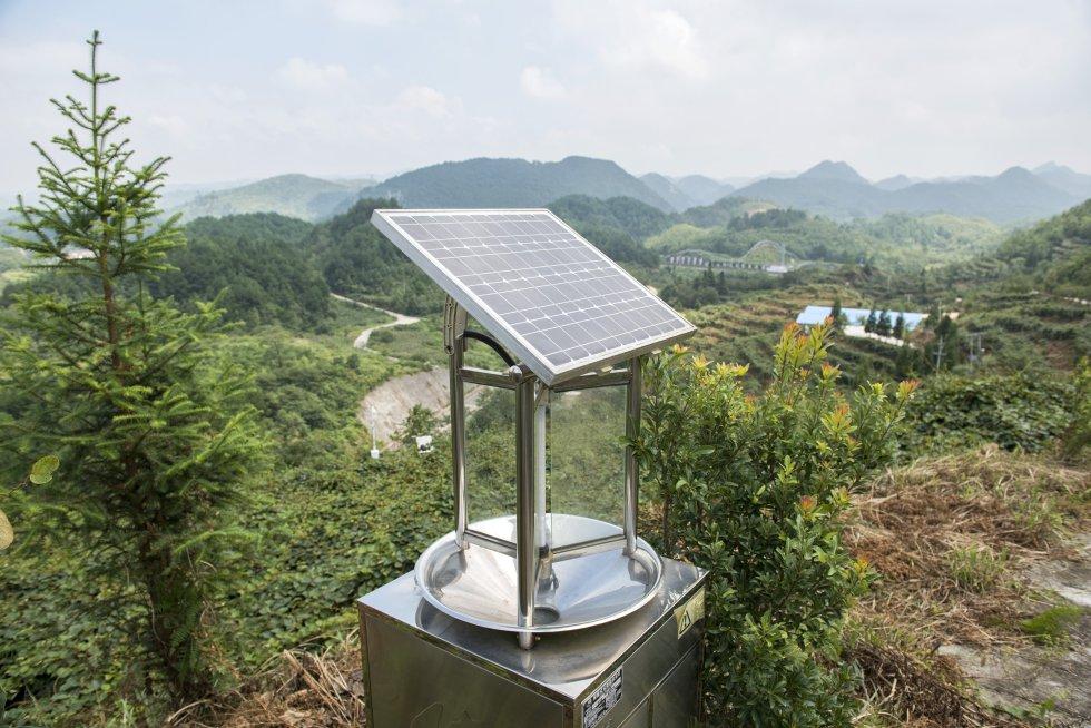 Otro de los elementos que se pueden observar en estas plantaciones de kiwis son las placas solares que proporcionan energía a sofisticados sistemas de control de plagas.