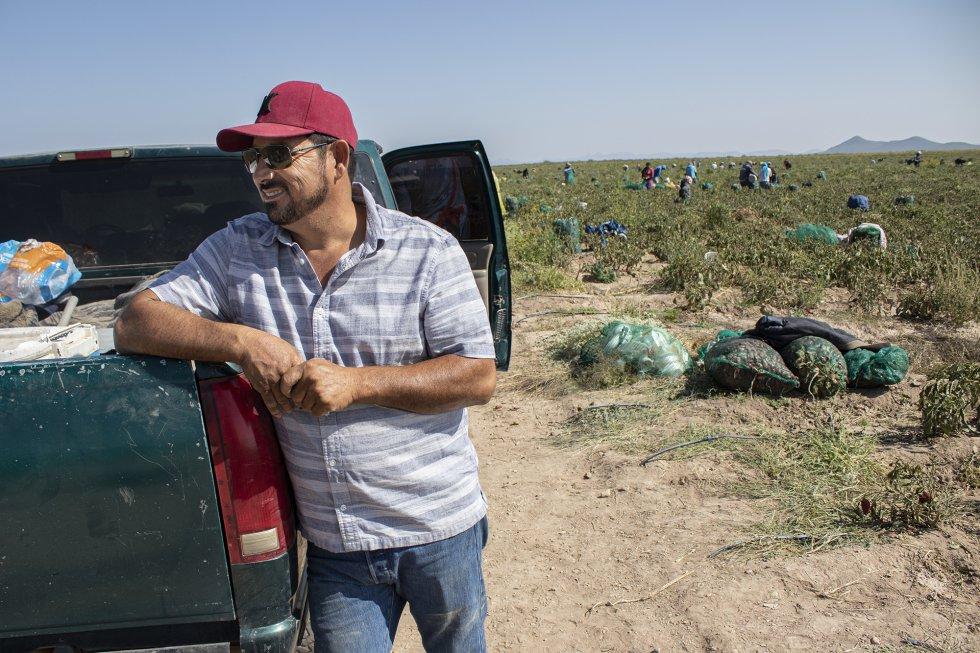 El propietario de la finca, Alejandro Chávez, cuenta que algunas veces ha tratado de frenar el ingreso de menores, pero entonces el resto de trabajadores se solidarizan y se niegan a faenar ese día. Por cada hectárea de chile, se ingresan unos 100.000 pesos (4.000 euros). Por las 150 hectáreas de Chávez las ganancias se elevan a medio millón de euros anuales.