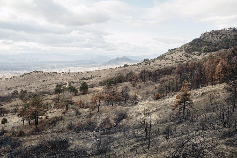 """Una colina quemada de los alrededores de la ciudad de Prilep. Allí, la única manera de calentar las casas es con leña. Comprarla a los vendedores oficiales cuesta muy caro y, además, se tarda mucho en conseguirla. Según los habitantes de la ciudad, alrededor del 60% de la población compra leña en el mercado negro. Los llamados """"ladrones de madera"""" son tanto macedonios como de etnia gitana, y se han dividido las colinas que rodean la ciudad. Son delincuentes peligrosos y van armados. A veces se producen tiroteos con la policía. La leña que venden en el mercado ilegal es muy barata, pero también muy contaminante porque todavía está húmeda y no se ha tratado adecuadamente. Según los ecologistas, la colina fue incendiada durante una venganza entre """"ladrones de madera"""" ilegales."""